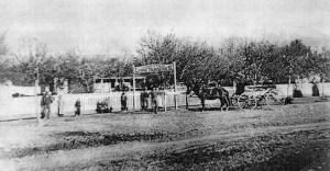 G. Smuin & Co. of Lynne Nurseries; photo c. 1880.