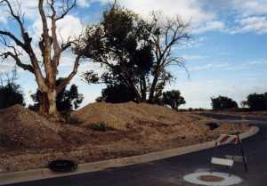 Century Dr. was first road of Fort Bingham subdivision; Indian tree on left; photo 2004.