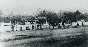 G. Smuin & Co. of Lynne Nurseries; photo c. 1885.